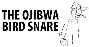 obija bird snare logo