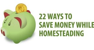 saving money homesteading featured image