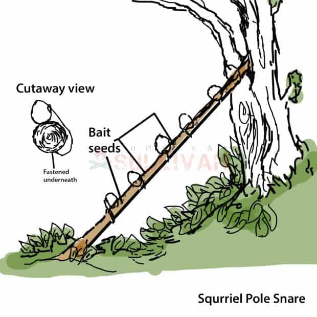 squrrie pole trap