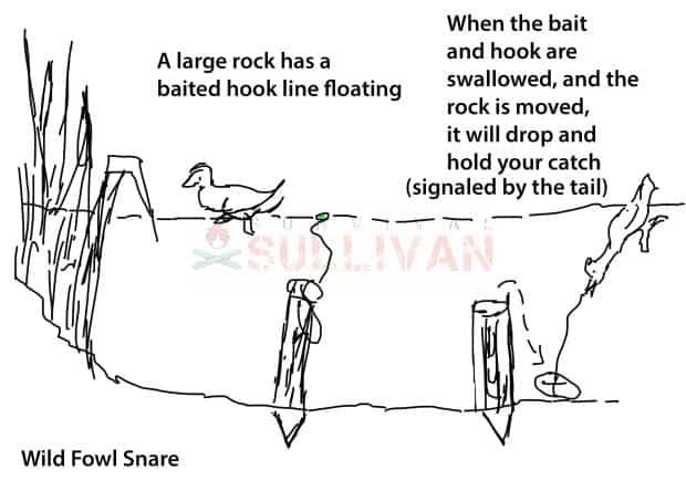 wild fowl rock snare