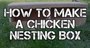 chicken nesting box logo blog
