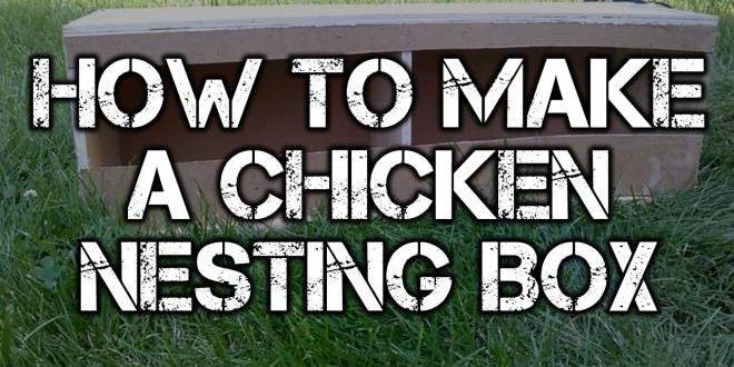 chicken nesting box logo blog