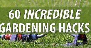 gardening hacks featured image