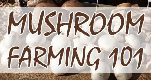 mushroom farming featured-image