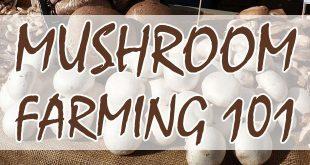 mushroom farming featured-image