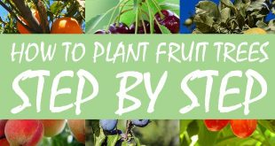plant fruit trees featured image