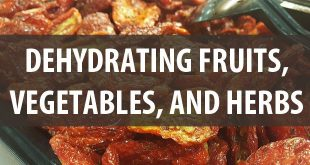 dehydrating fruits and veggies