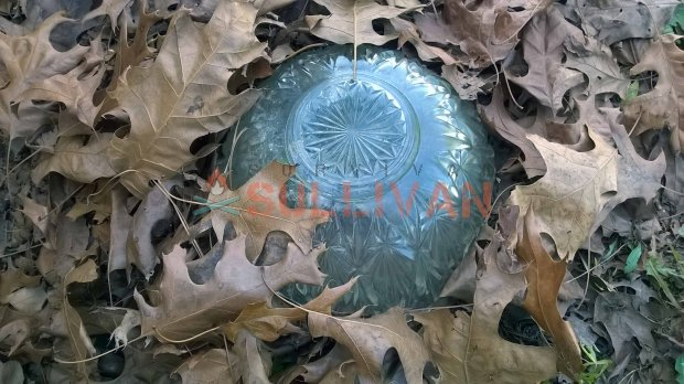 cloche glass with leaves protecting it