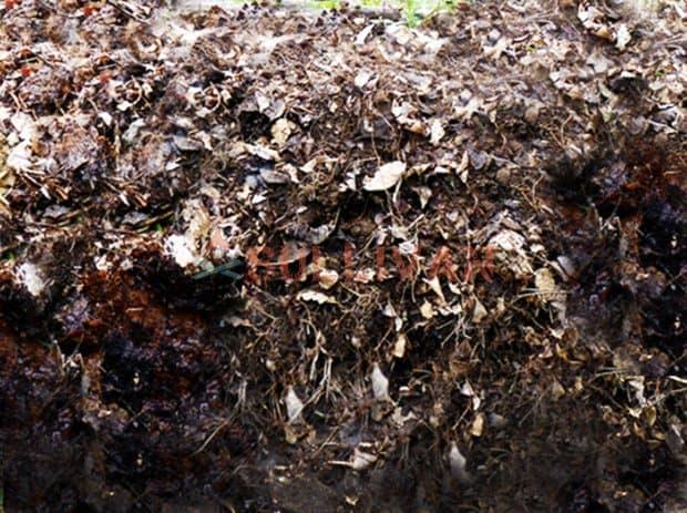 leaf mold pile
