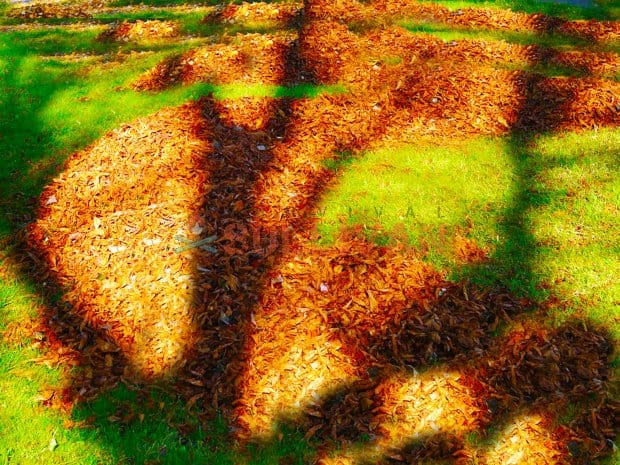 leaves piles to mulch
