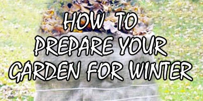 prepare garden winter featured