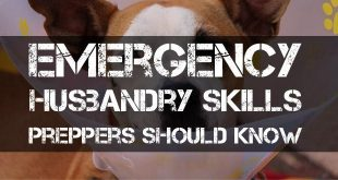 emergency husbandry featured image