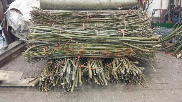 Coppiced willow rods with bark