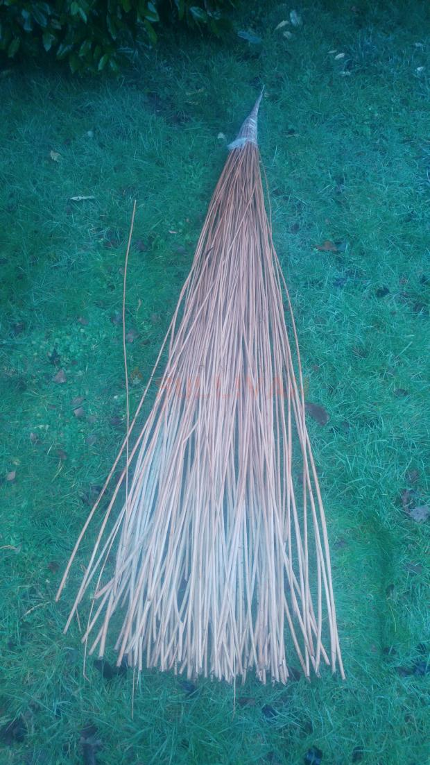 dried buff willow in wet grass