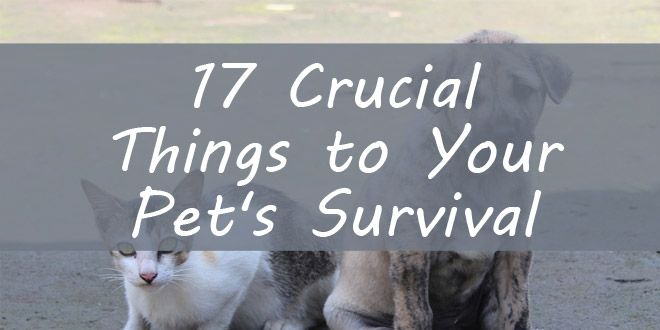pet survival featured image