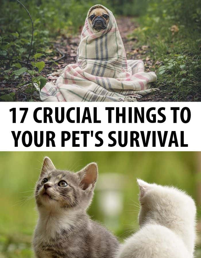 pet survival pinterest