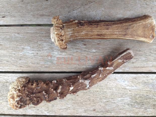 Two antler soft hammers