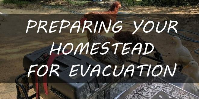 evacuating a homestead featured-image
