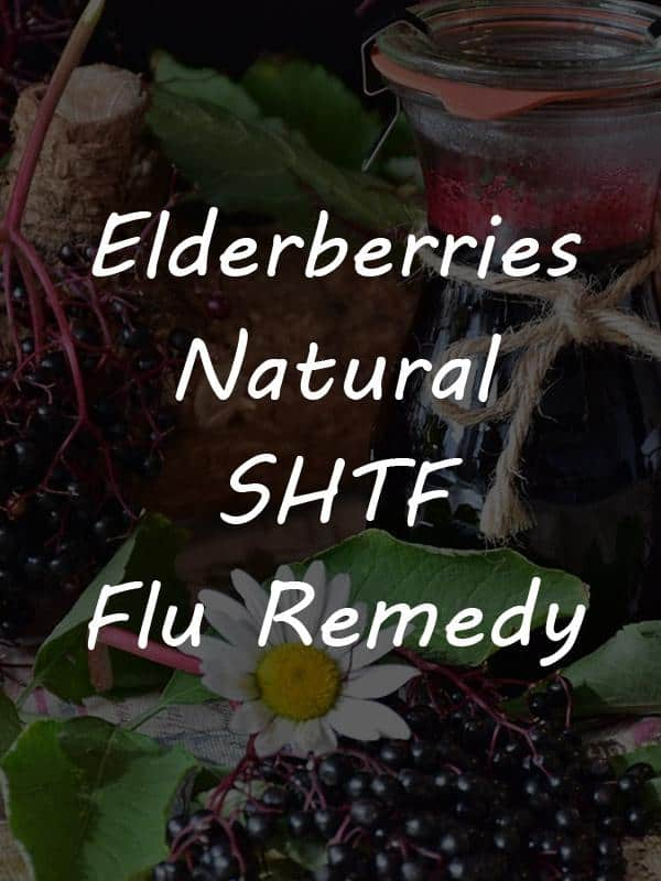 elderberries pinterest image