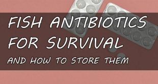 fish antibiotics featured image