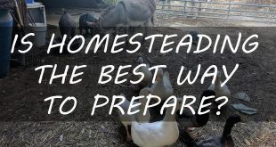 homesteading best way to prep featured