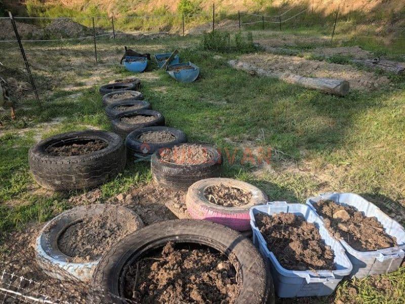 growing herbs in old tires
