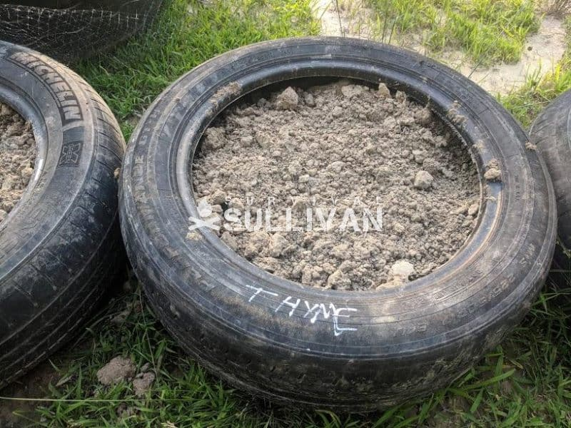 horse manure inside an old tire herbs growing