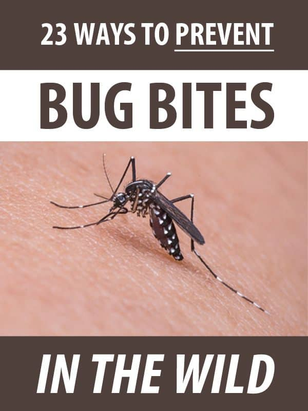 ways to prevent bug pinterest