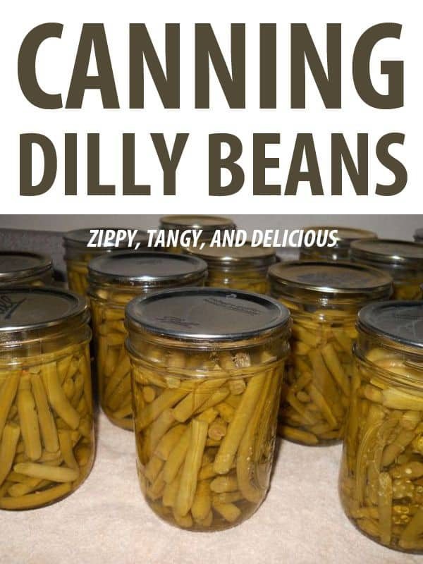 canning dilly beans pinterest