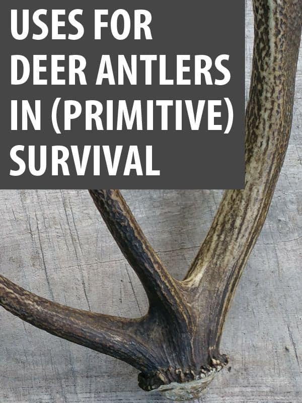 deer antler uses pinterest