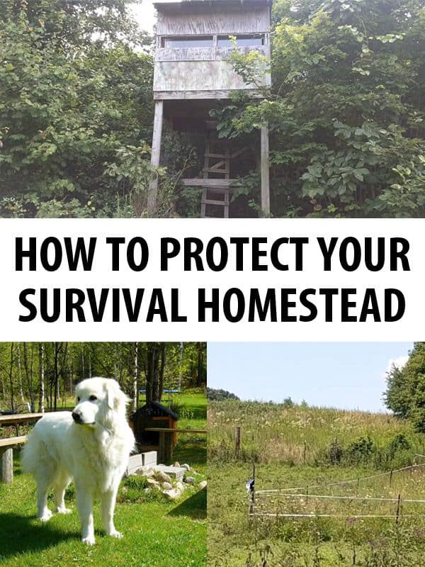 protecting survival homestead pinterest