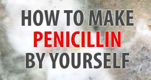 how to make penicillin featured