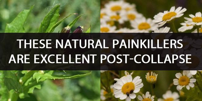 natural painkillers featured
