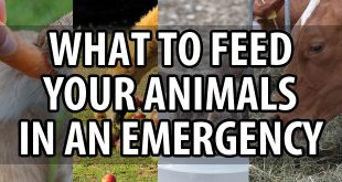 what to feed animals featured