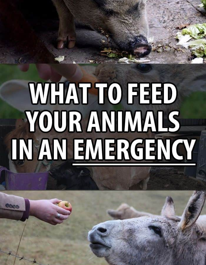 what to feed animals pinterest