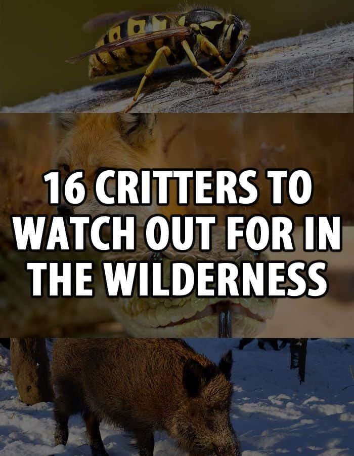 wilderness critters pinterest