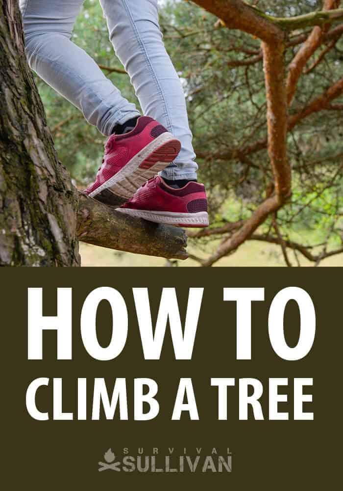 climbing trees pinterest