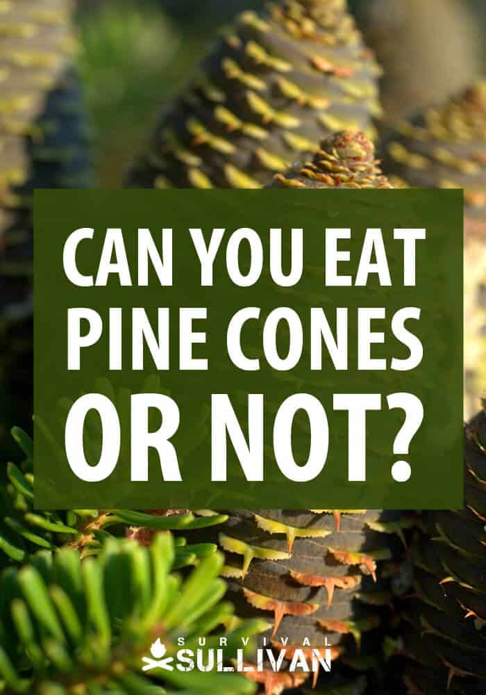can you eat pine cones pinterest