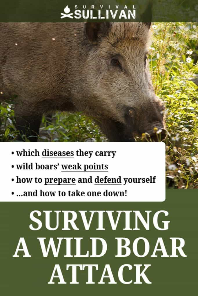 wild boar attacks pinterest