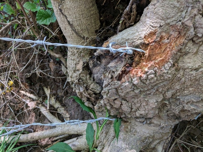 barbed wire tied to tree