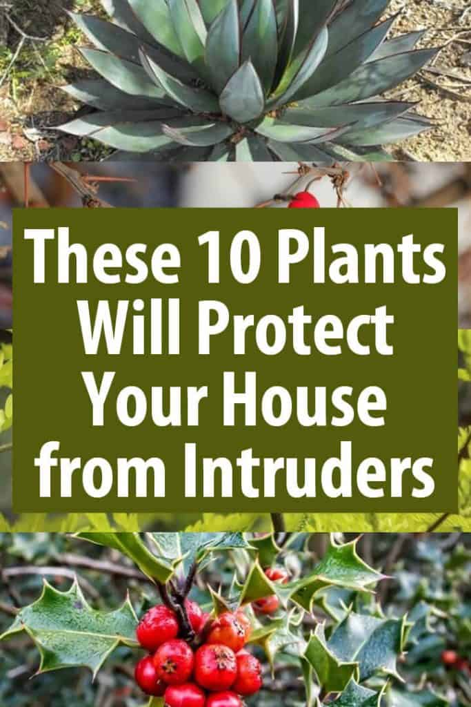 plants protecting pinterest