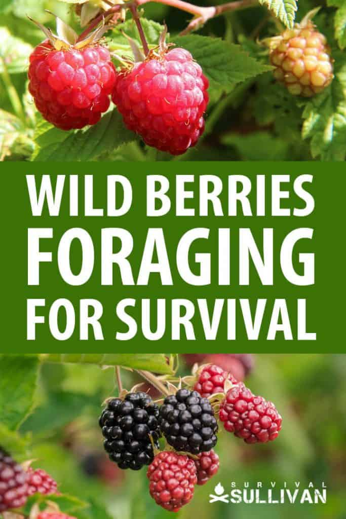 wild berries foraging pinterest