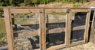 DIY survival chicken coop