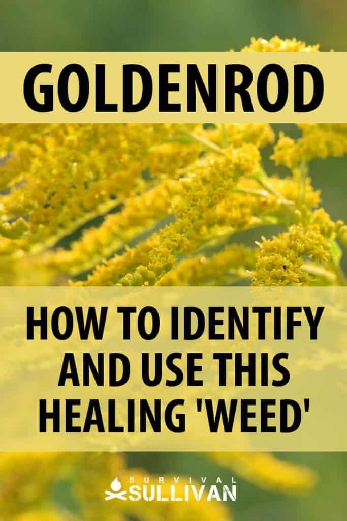 goldenrod pinterest image