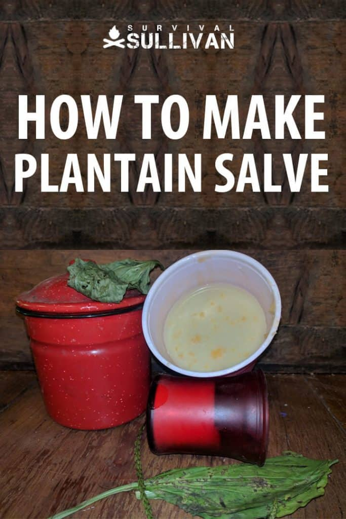 plantain salve pinterest