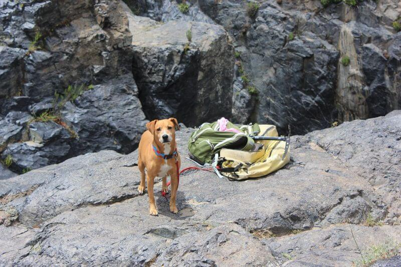 dog on a hiking trip