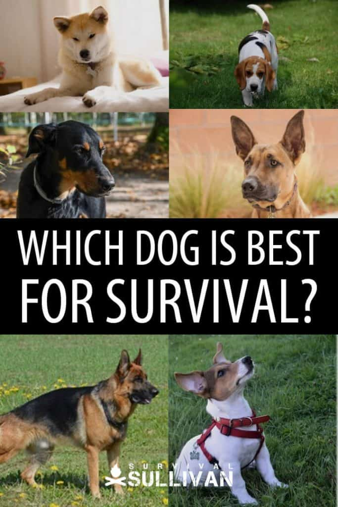 best survival dogs pinterest