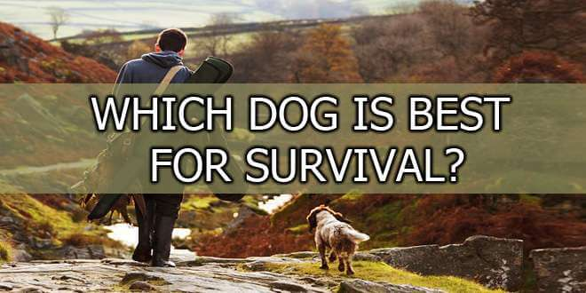 dog for survival featured