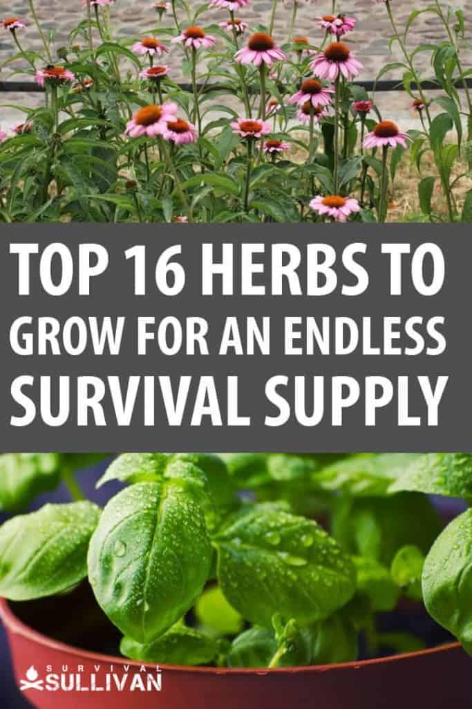 herbs pinterest image