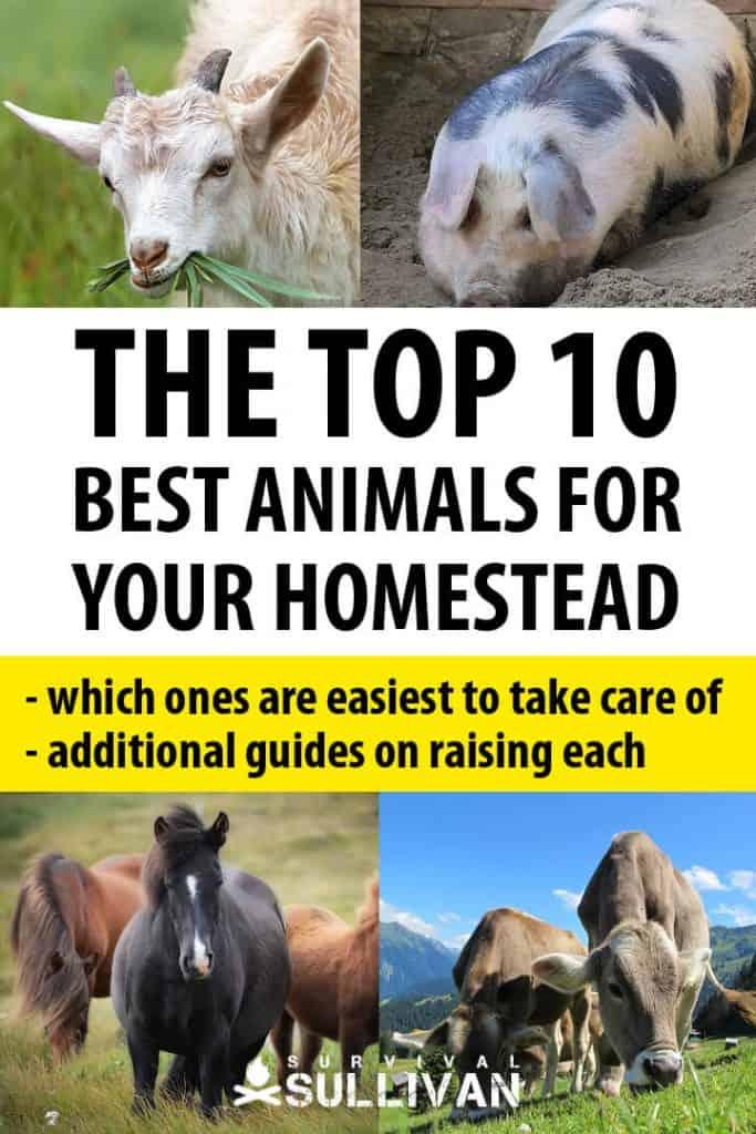 best homesteading animals Pinterest image